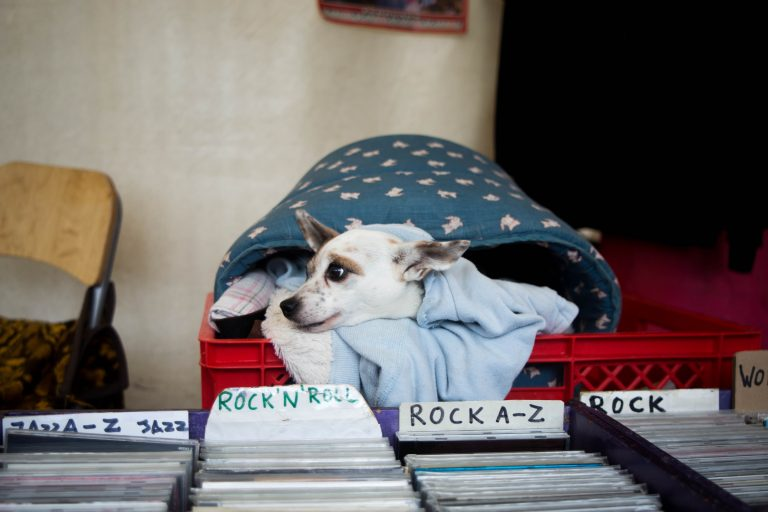 Sub-woof-ers: Sonic branding in the pet industry